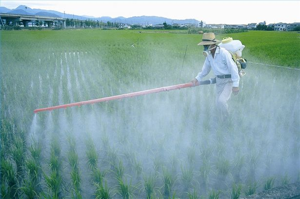 Pesticides are poisoning us all